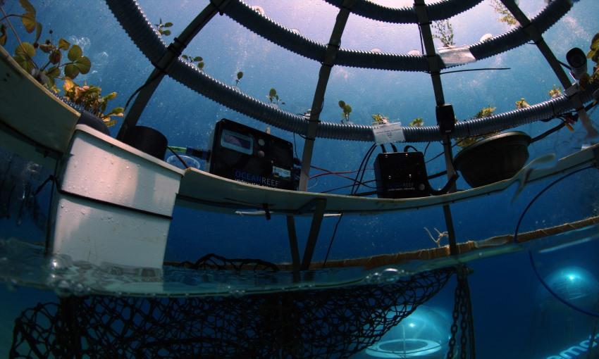 agricoltura subacquea