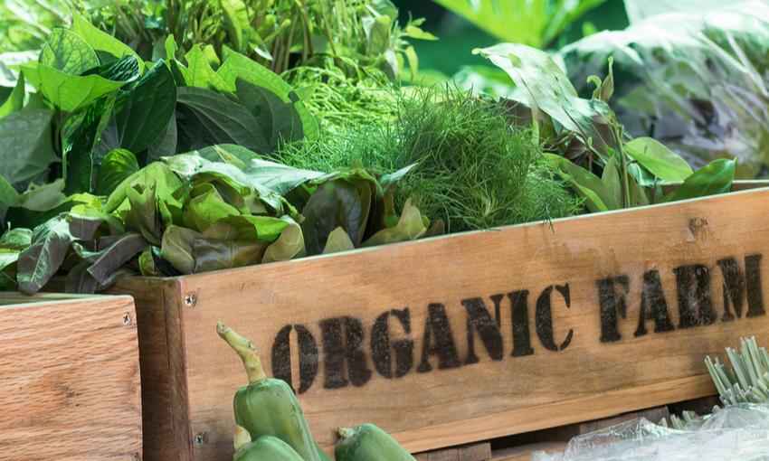 cibo biologico trend consumi