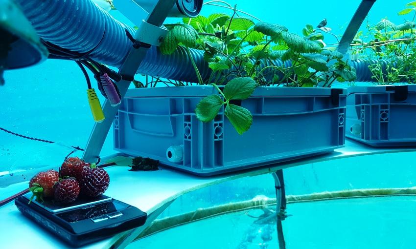 idroponica subacquea