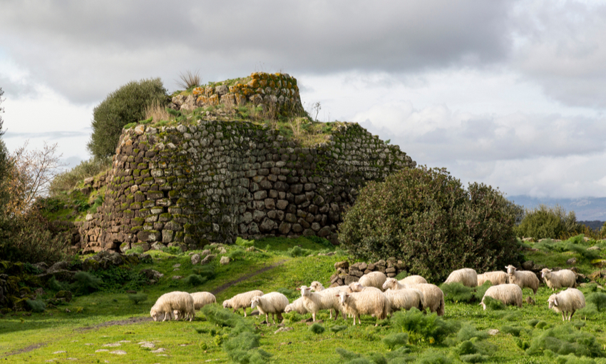pecore produzione pecorino sardo
