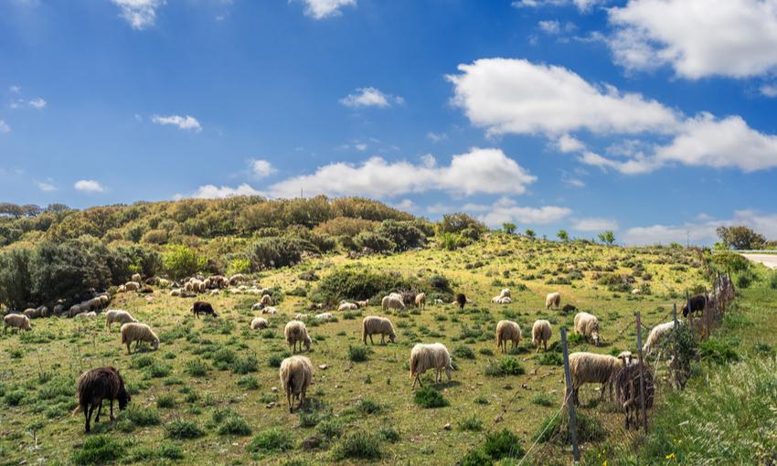 pecorino sardo zona produzione