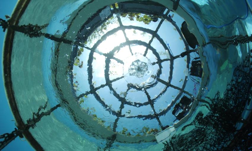 progetto idroponica subacquea
