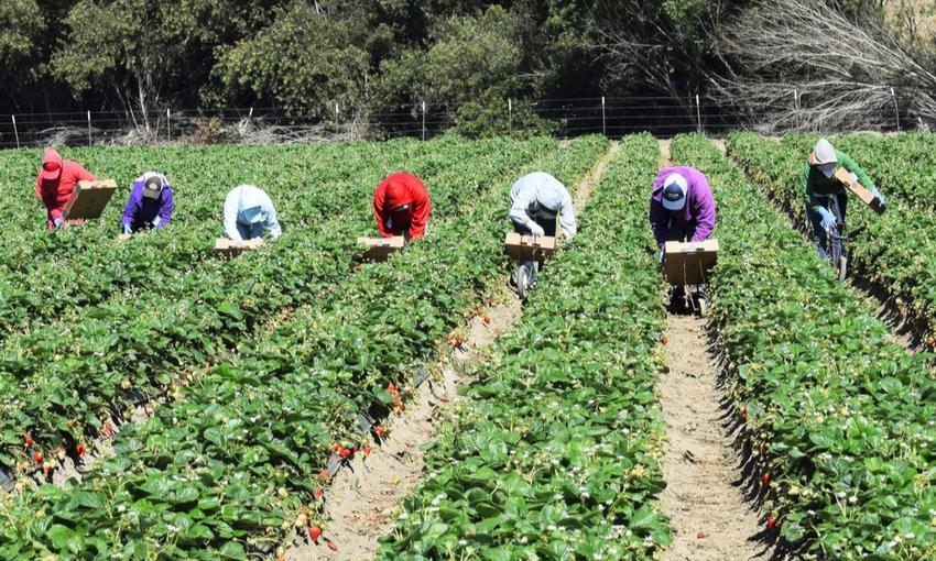 sfruttamento lavoratori agricoli