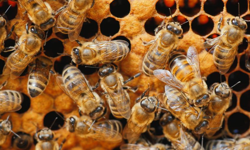produzione miele calo
