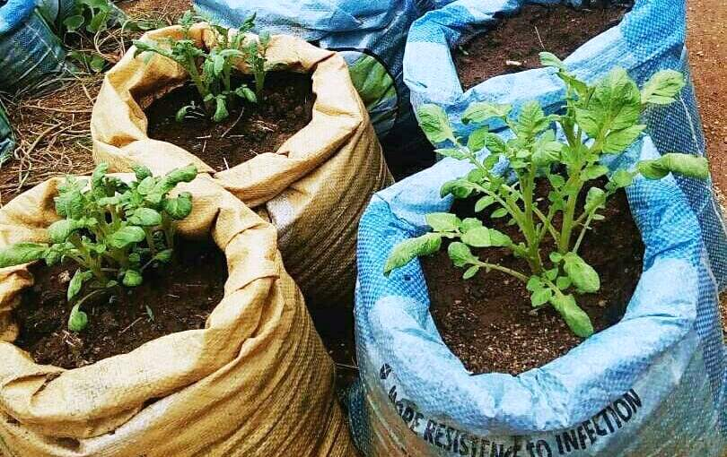 coltivazioni fresh direct nigeria