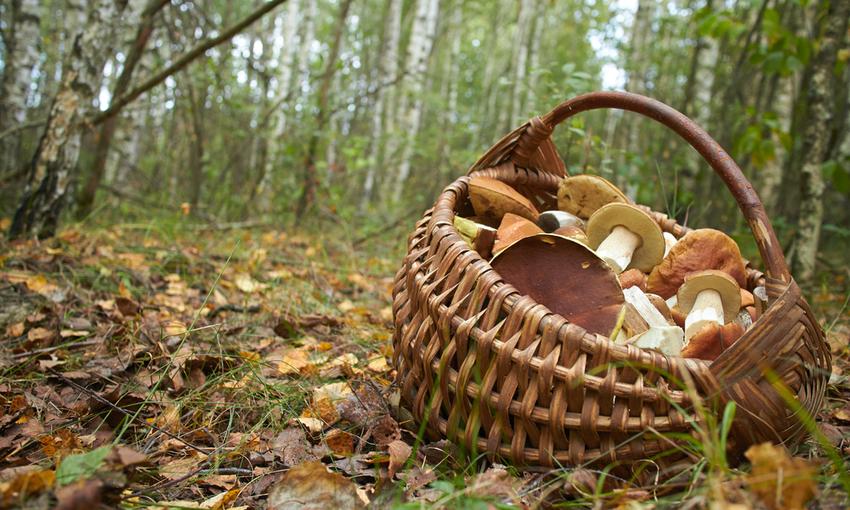 cestino per la raccolta dei funghi