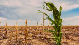 cibo e cambiamento climatico
