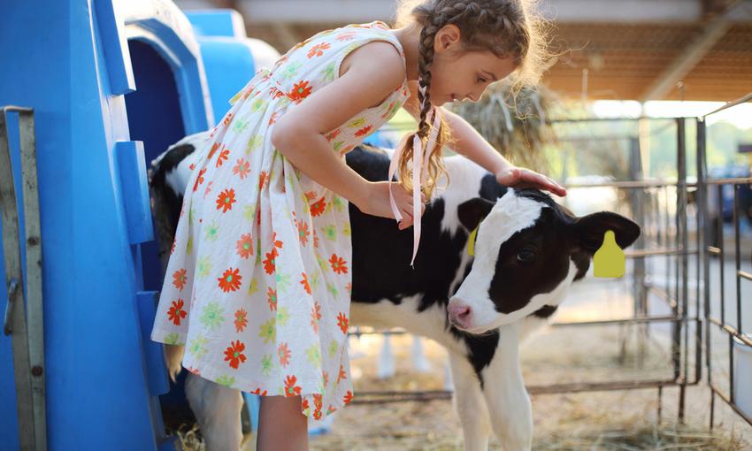 bambina che accarezza un vitello