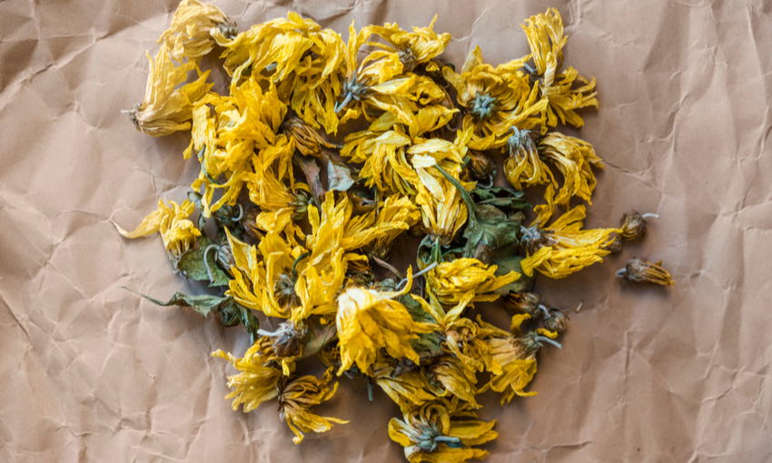fiori di campo essiccati