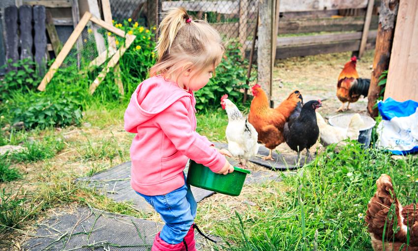 bambina che dà da mangiare alle galline