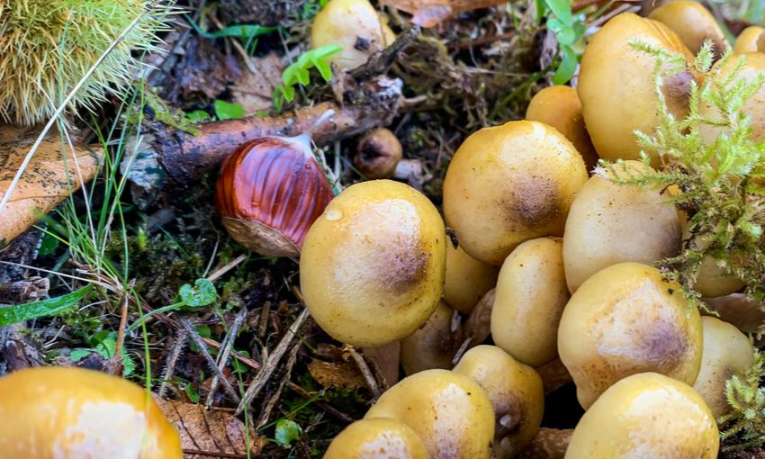 sapori autunno