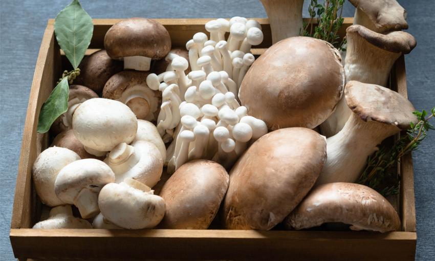 diverse varietà di funghi