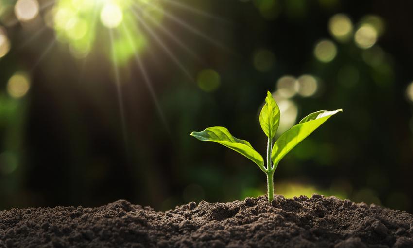 pianta che cresce