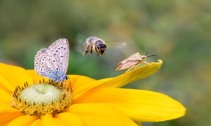 farfalla che si posa su un fiore