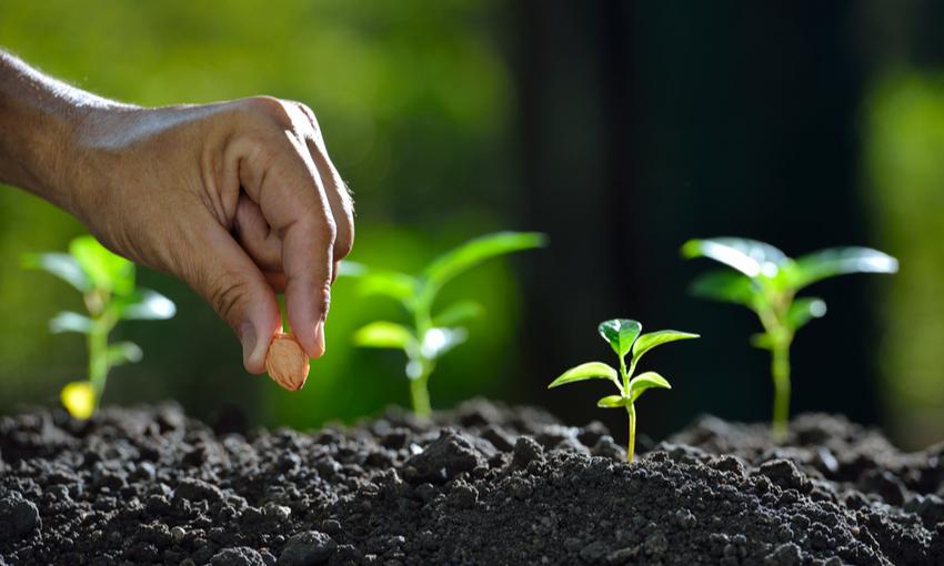 uomo che pinata un seme nel terreno