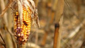 cibo e cambiamenti climatici