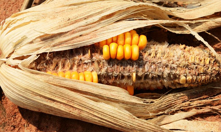 effetti cambiamento climatico sul cibo