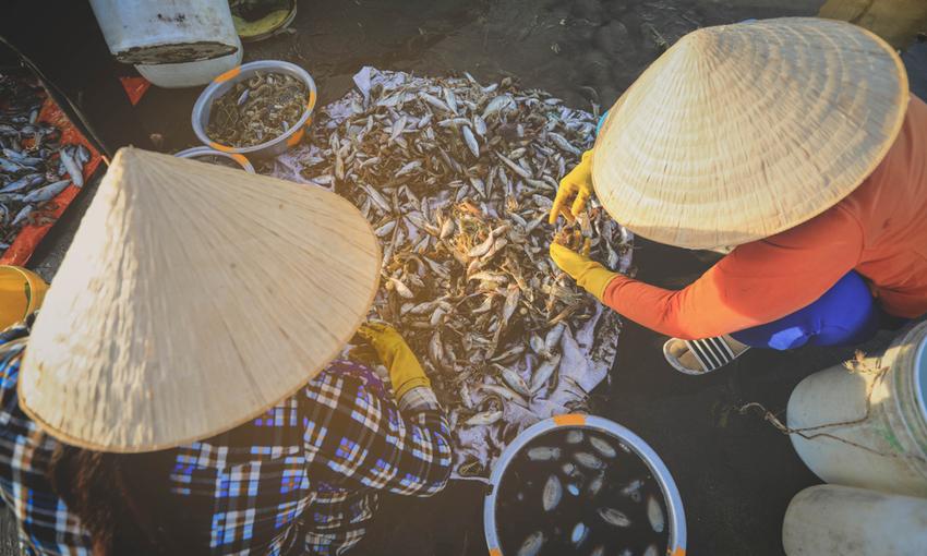 effetti cambiamento climatico sulla pesca