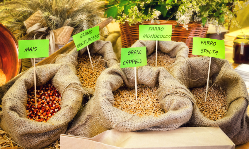 varietà di grani antichi