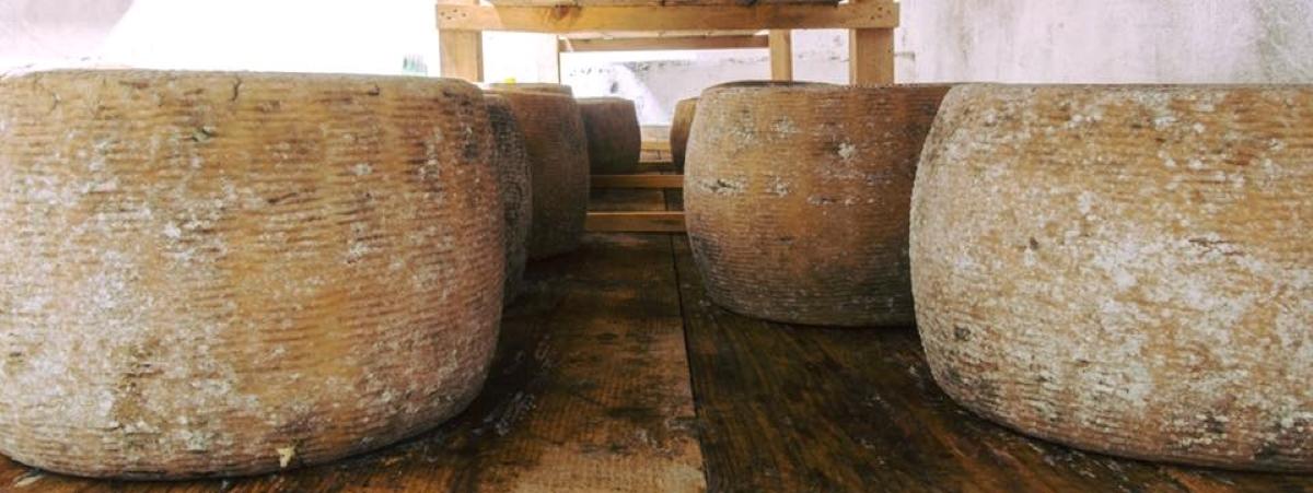 formaggio tipico della basilicata