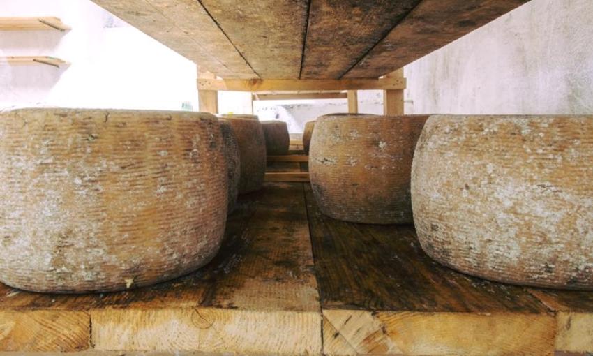 formaggi tipici della basilicata