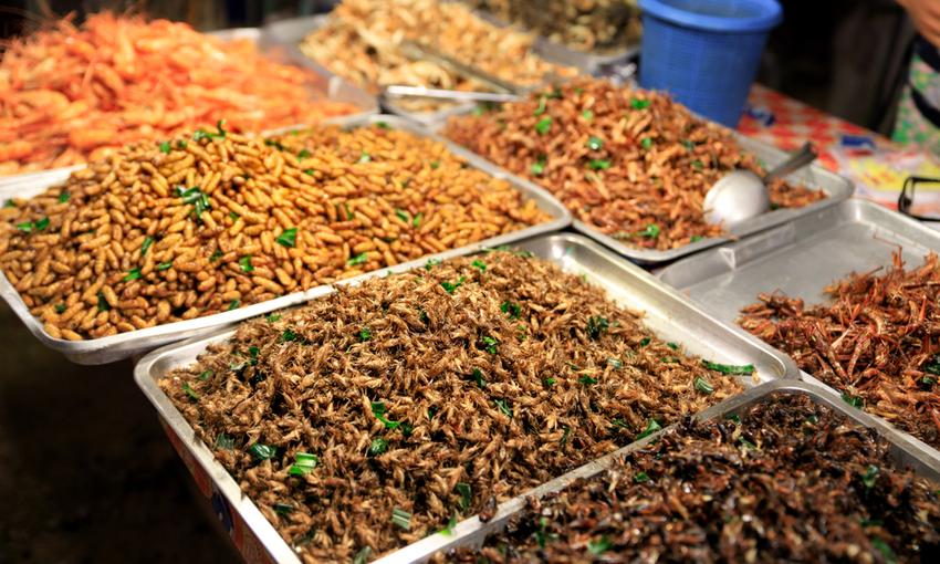 sfida insetti