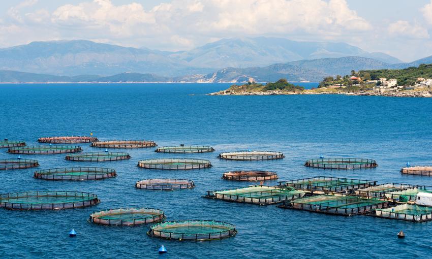 allevamento pesce strutture