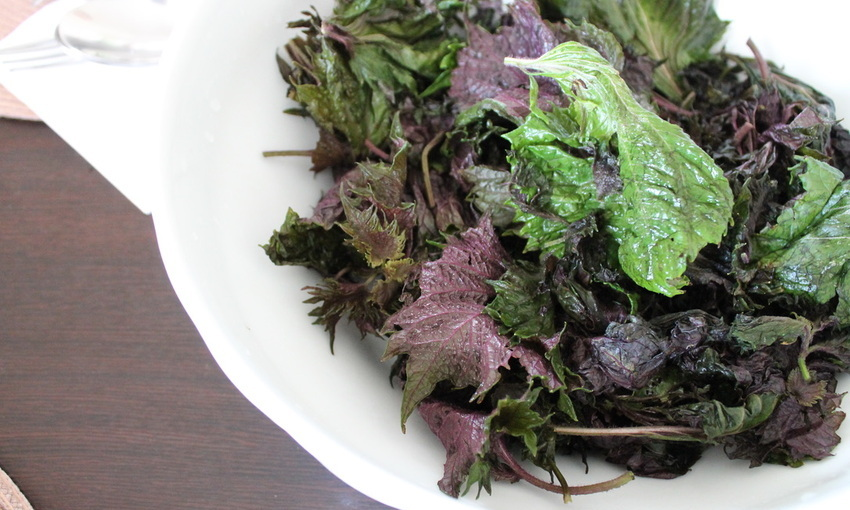 foglie di shiso
