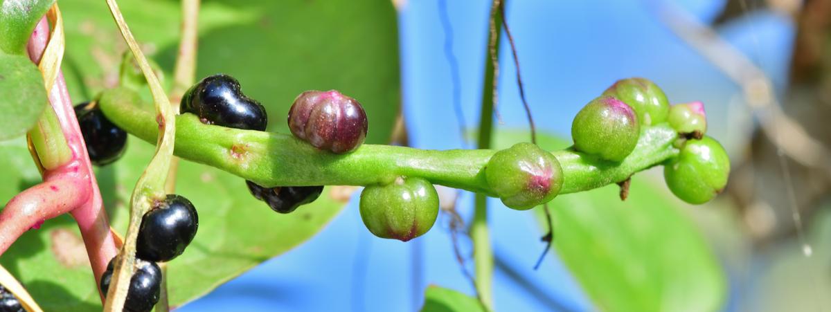 piante insolite