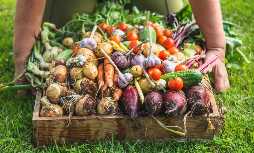 raccolto agricoltura