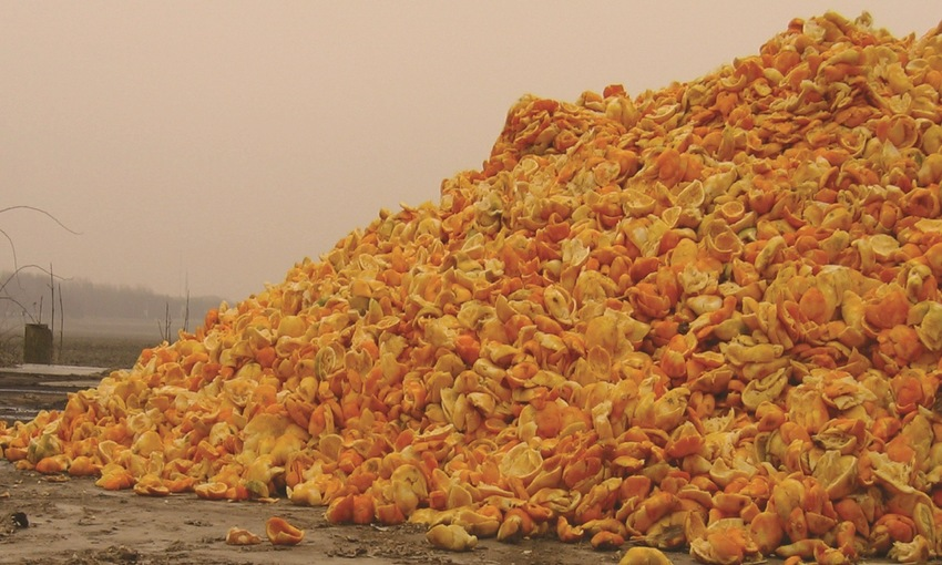 Scarti di arance