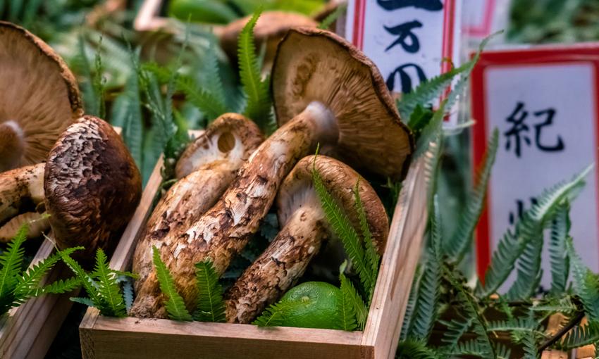 Funghi matsutake