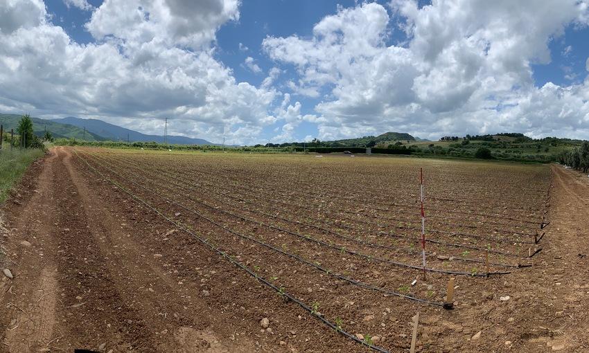 Zona di produzione peperone