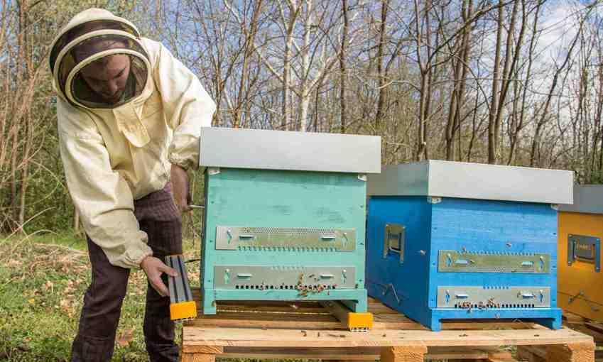 Hive tech installazione