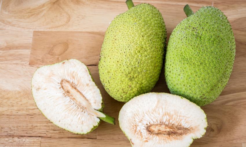 breadfruit frutto