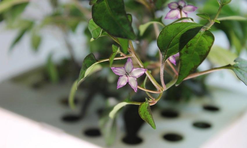 Ecoltivo fiori