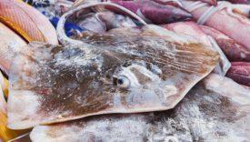 pesci sconosciuti