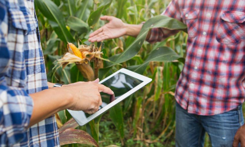 Manodopera agricoltura