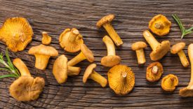 funghi finferli