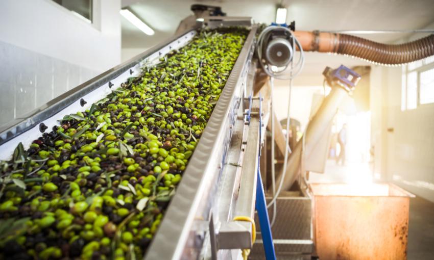 Produzione olio d'oliva