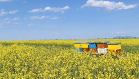 Diminuzione insetti impollinatori agricoltura