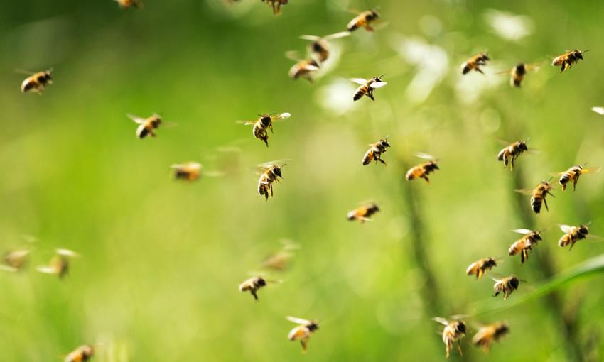 Insetti impollinatori colture