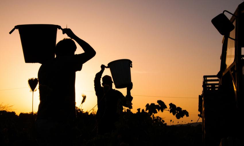 Lavoro nero agricoltura