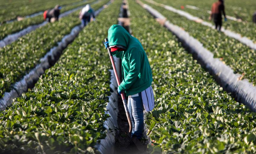 sfruttamento agricoltura