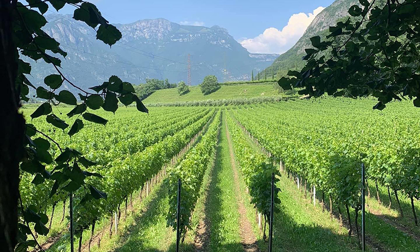Tenuta San Leonardo Trentino