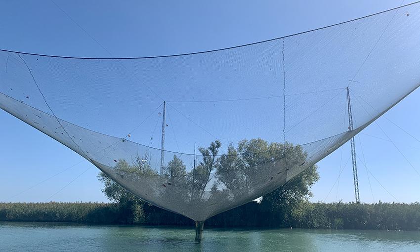 Bilancia pesca