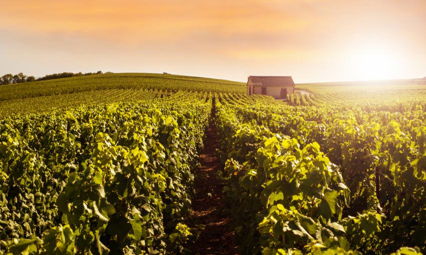 Champagne regione