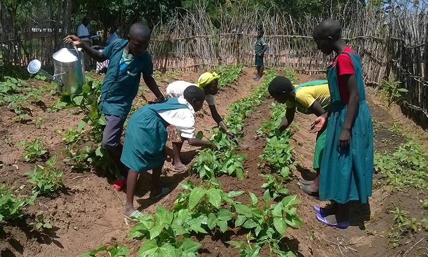 Orti in Africa Malawi