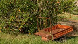 food forest sicilia