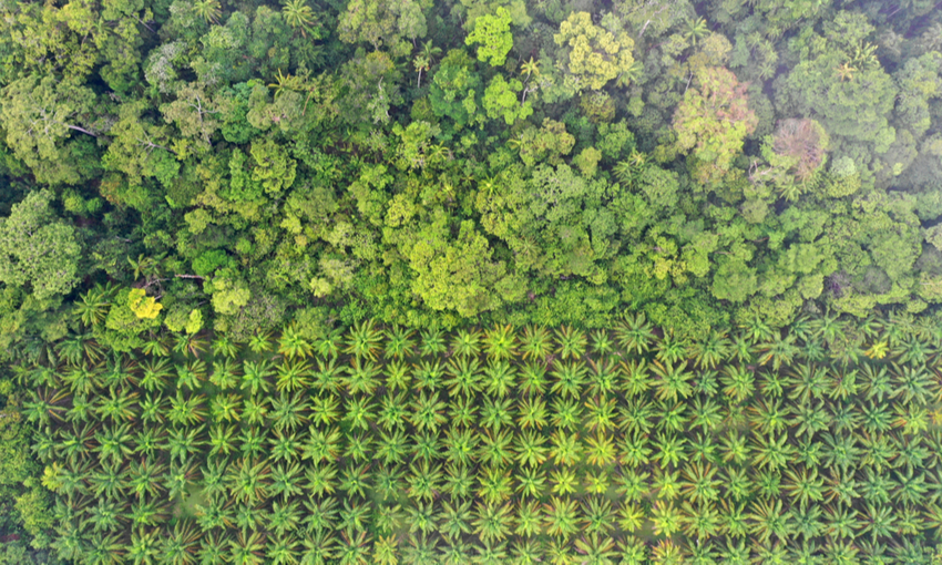 cibo e deforestazione